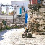 moniの村3