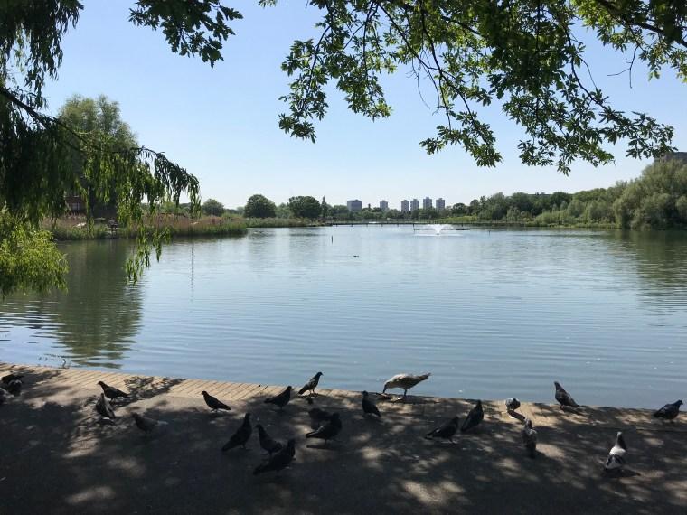 burgess-park-pigeons-lake