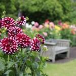 """Осінні квіти – топ-5 """"Зеленої Садиби"""" (част.II)"""