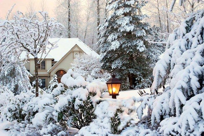 зимовий сад фото