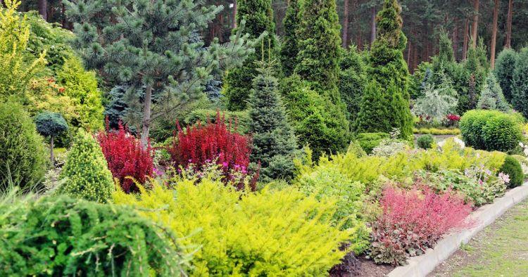 Хвойні рослини в ландшафтному дизайні – 50 фото-схем 0e1ac49d82174