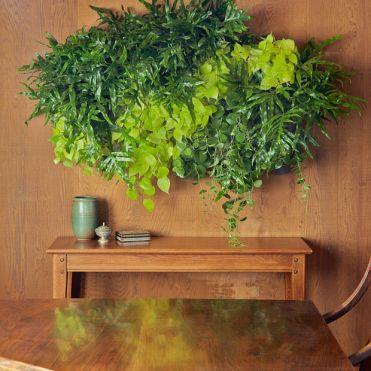 вертикальне озеленення зображення 41