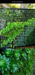 вертикальне озеленення зображення 45