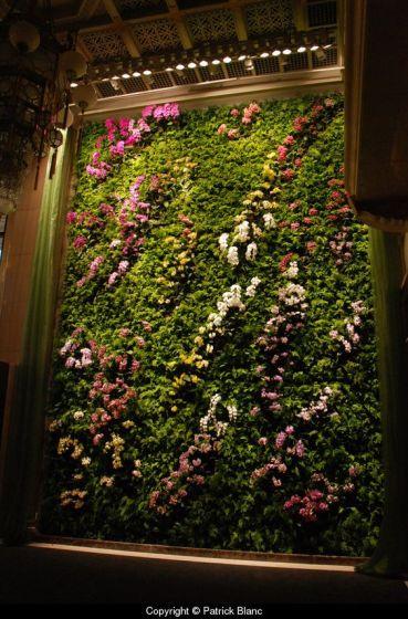 вертикальне озеленення зображення 53