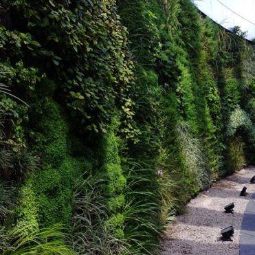 вертикальне озеленення зображення 58