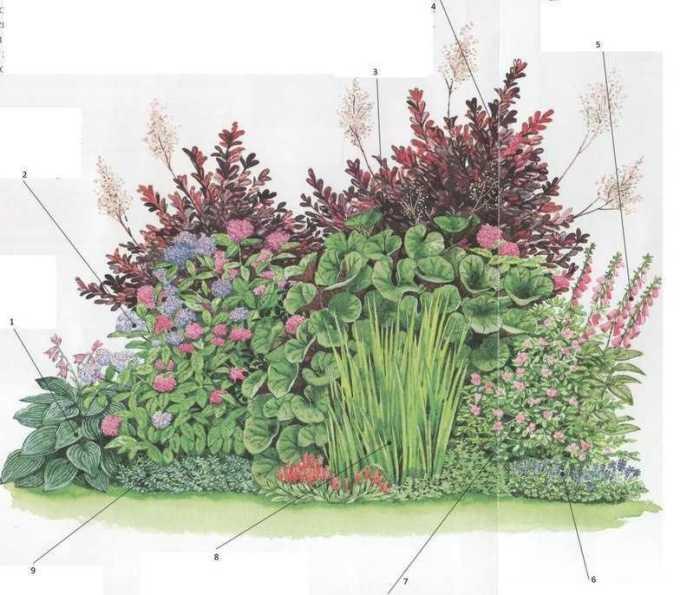 квітник зображення 23