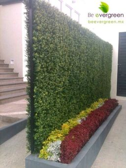 вертикальне озеленення зображення 7