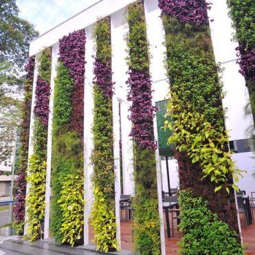 вертикальне озеленення зображення 10