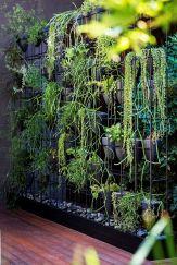 вертикальне озеленення зображення 11