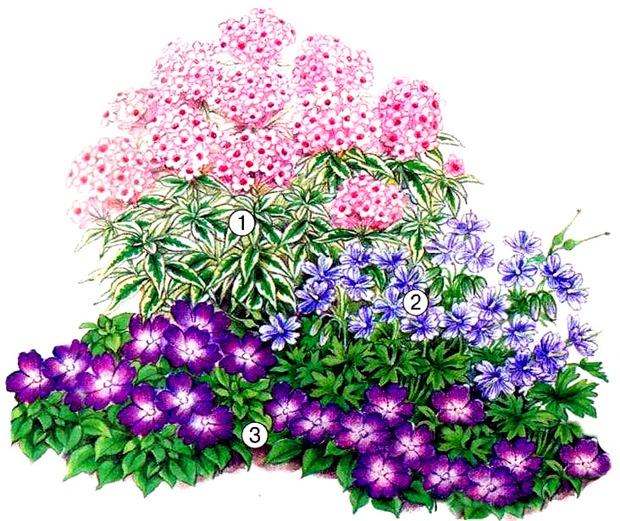 квітник зображення 7