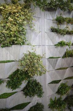 вертикальне озеленення зображення 19