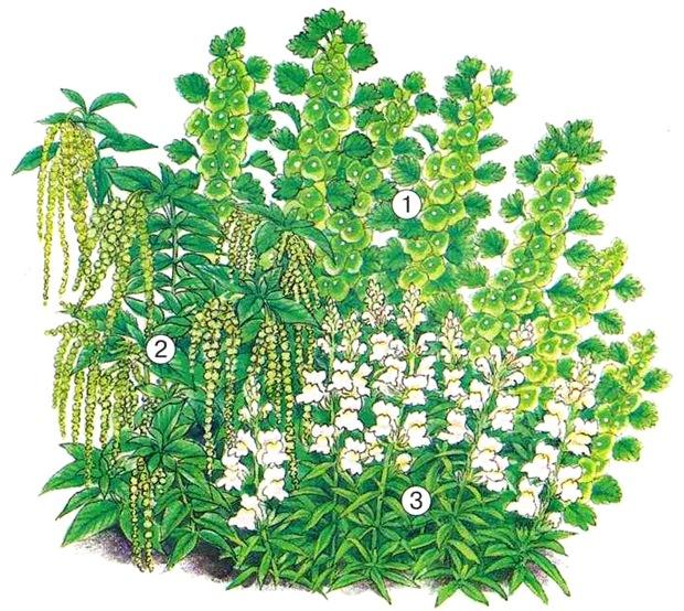 квітник зображення 9