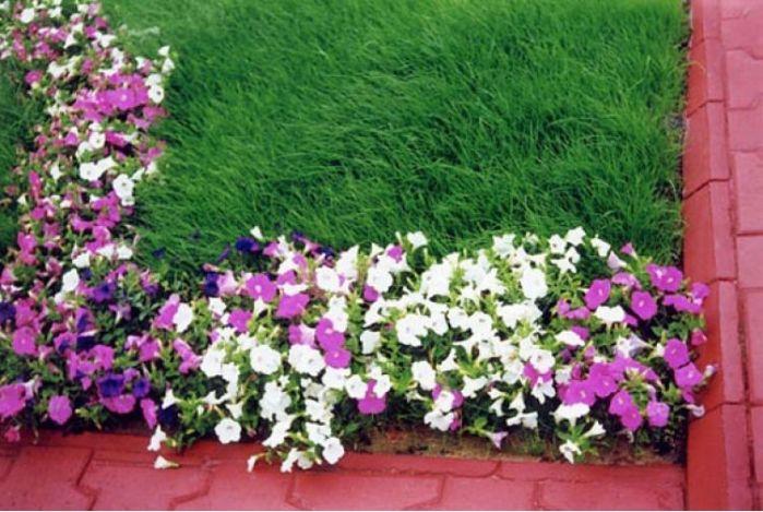 рослини для рабатки зображення