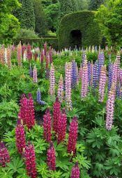 ідеї для саду картинка 16