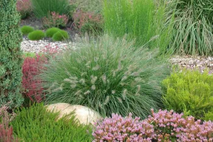 озеленення декоративні трави картинка