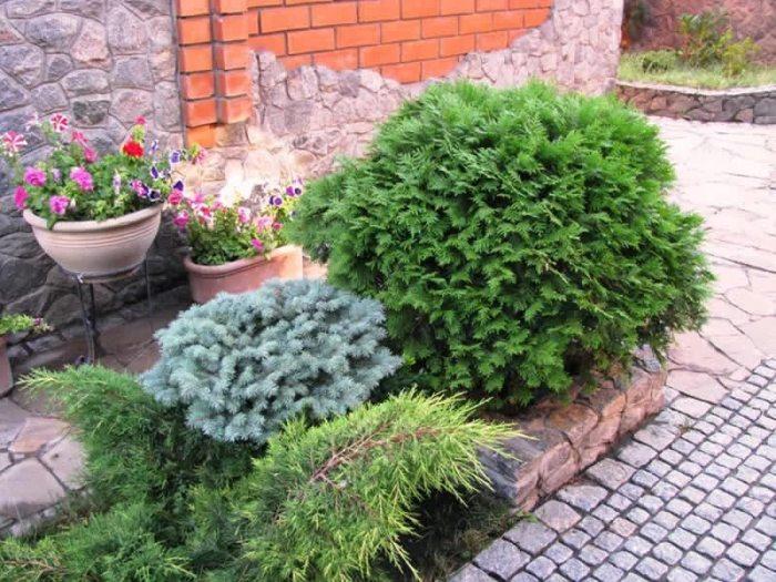 озеленення зображення