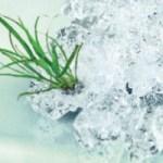 Гідрогель – літо без поливу