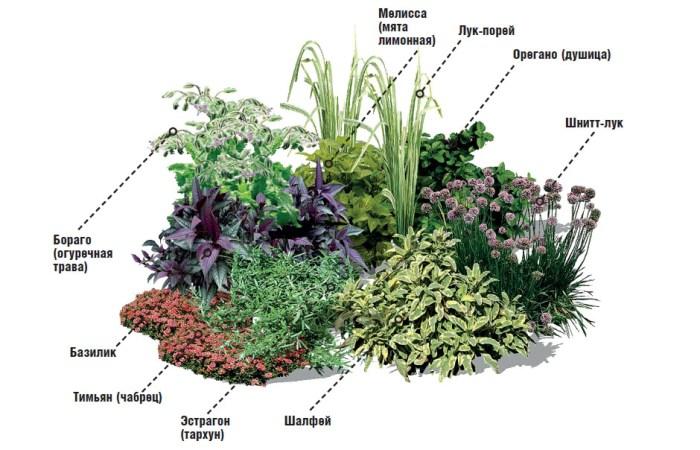 клумба з травами схема зображення