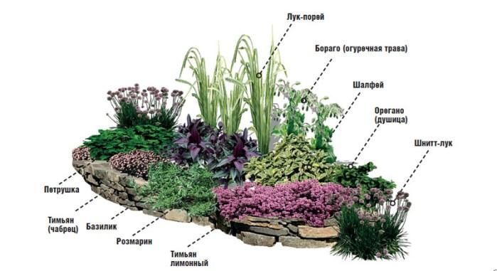 клумба з травами схема зображення 4