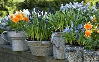 дизайн саду зображення 11