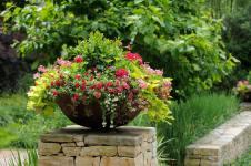 Експрес-озеленення – краса в горщиках (16 фото)