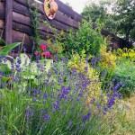 Створюємо квітник безперервного цвітіння — мій досвід