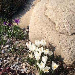 весняні цибулинні