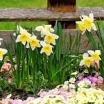 Де посадити весняні цибулинні? 5 правильних рішень