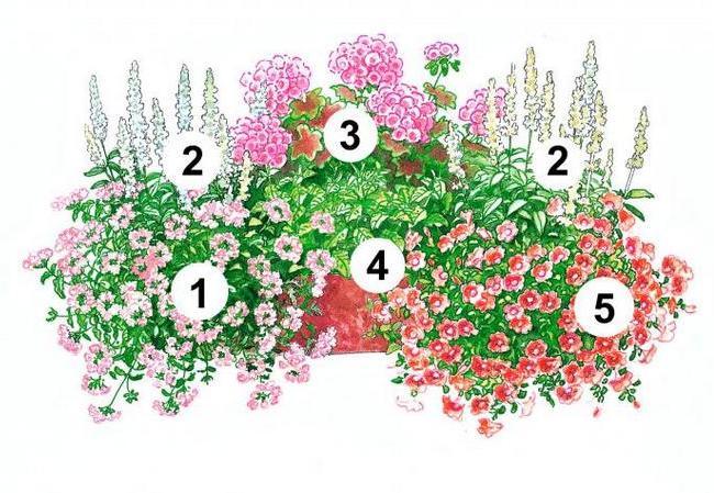 балконні квіти фото 1