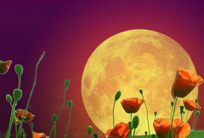 вплив місяця на рослини фото