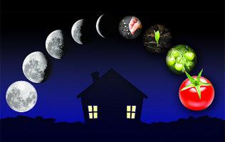 Місячний посівний календар городника на 2018 рік