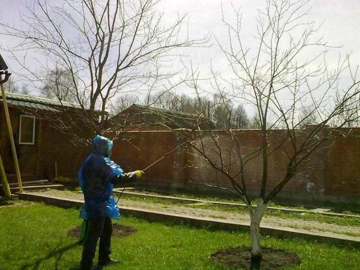 обприскування саду весною фото