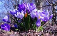 календар садово-городніх робіт на березень фото