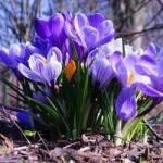 Календар садово-городніх робіт на березень