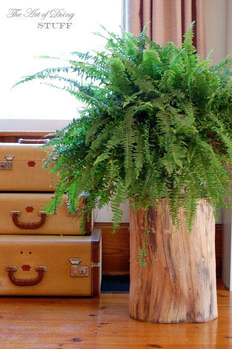 кімнатні рослини в інтерєрі фото