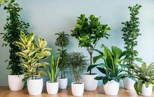 Кімнатні рослини – 5 універсальних правил догляду