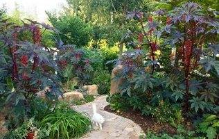однорічні рослини велетні фото