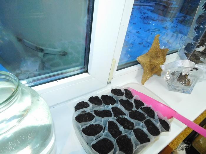 як сіяти насіння в одноразові мішечки для розсади фото