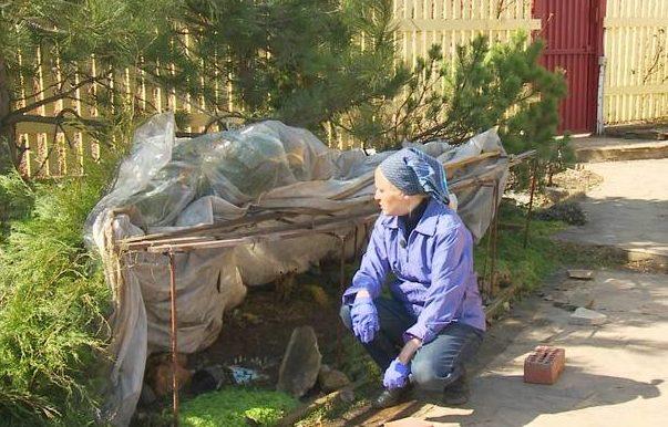 оцінюємо пережиту зиму в саду фото