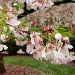 Календар садово-городніх робіт на квітень