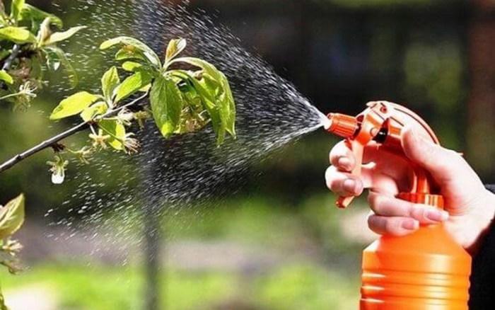 Позакореневе підживлення рослин буває плановим і терміновим