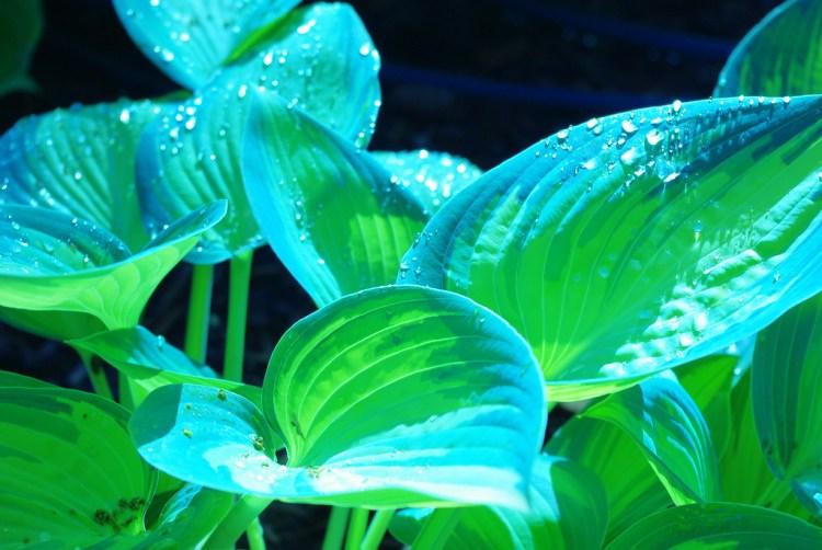 Холодні відтінки забарвлення (синій, блакитний, сріблястий) вказують на залежність забарвлення від притінения