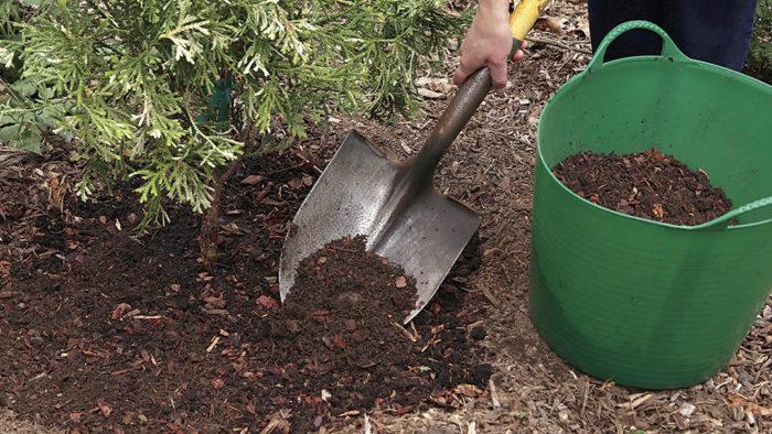Компост можна просто розсипати по поверхні пристовбурового кола і злегка закласти в грунт