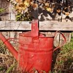 Чим підживити рослини восени?