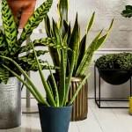 Кімнатні рослини в інтер'єрі — 20+ оригінальних ідей розміщення