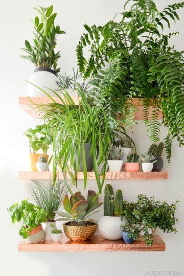 Пропоную розглянути варіант цілого саду на полицях