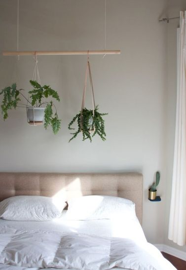 Рослини можна вішати не тільки над підвіконням