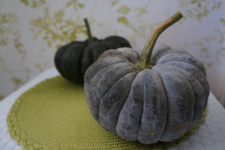 Гарбуз, сорт «Чірімен» (Сhirimen)