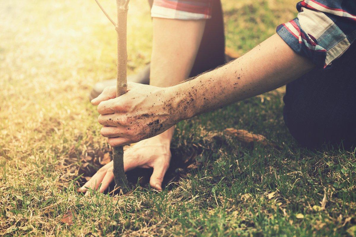 Що потрібно знати для успішної посадки саджанців восени?