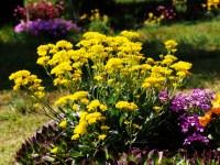 Як правильно посіяти квіти під зиму?